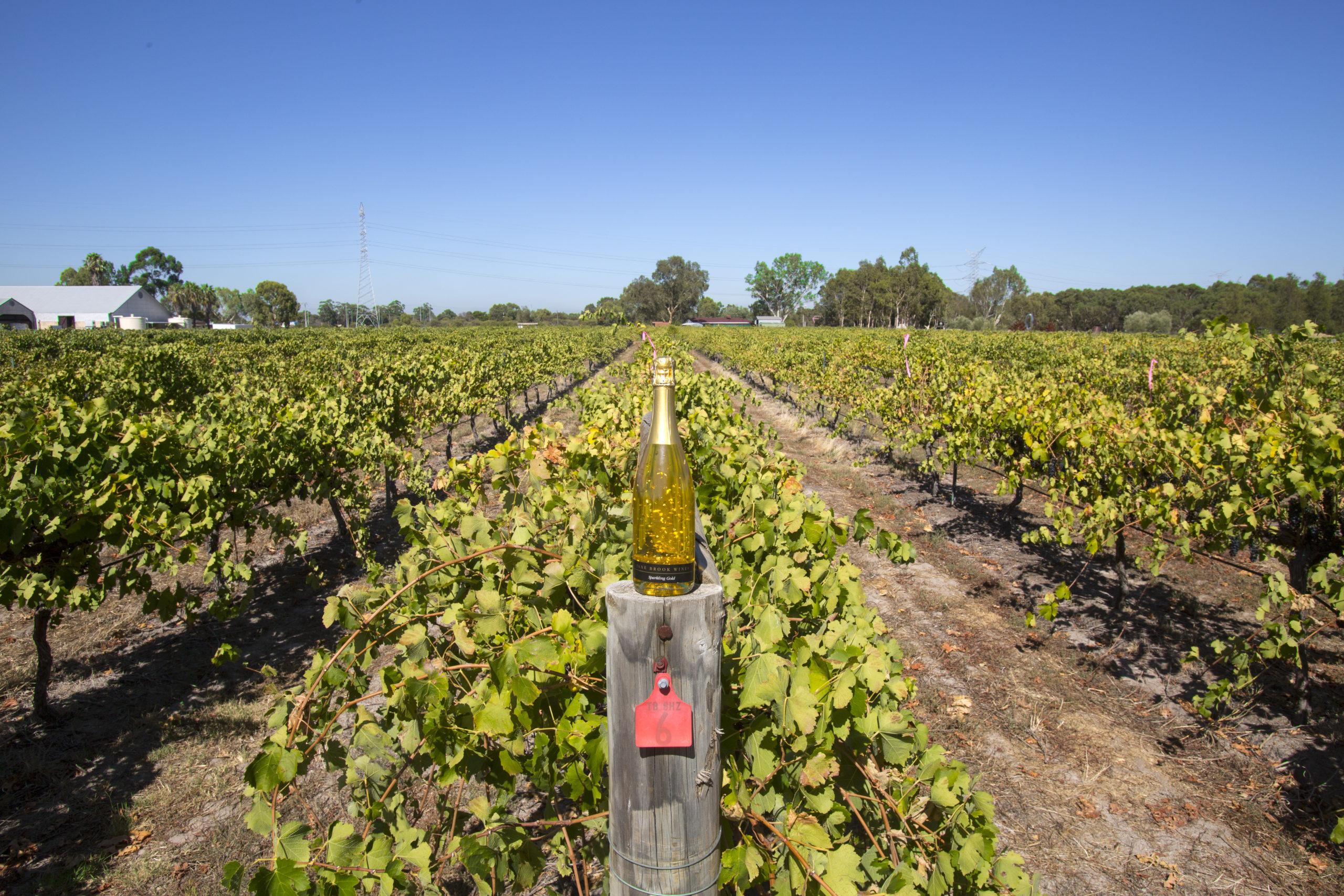 Jane Brooke Estate Wines, Swan Valley