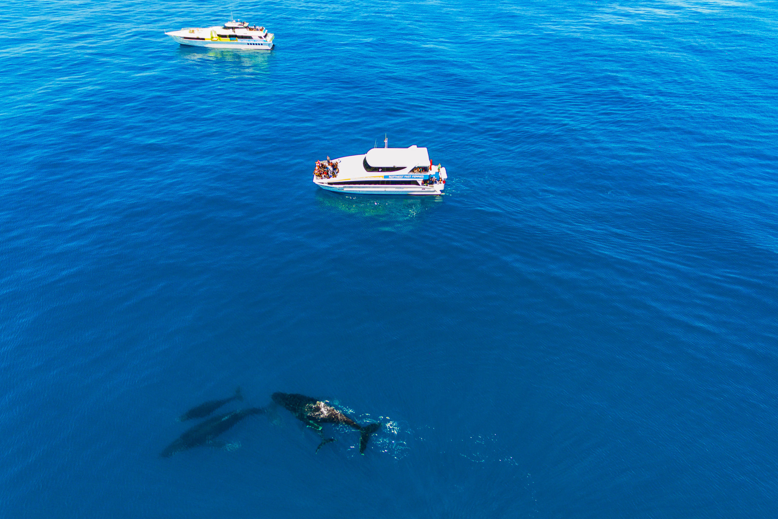 Whale Watching, Perth